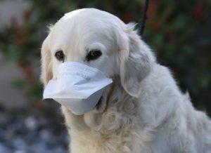 Un chien masqué
